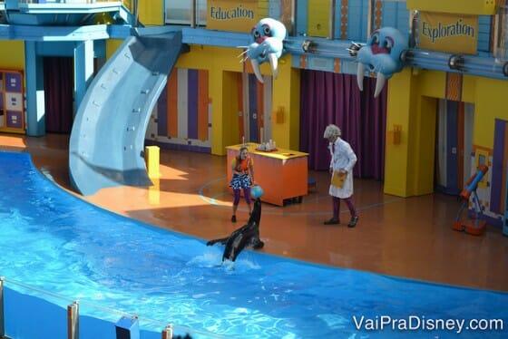 Parques: Show dos leões marinhos da Sea Word. Animais adestrados e comédia.