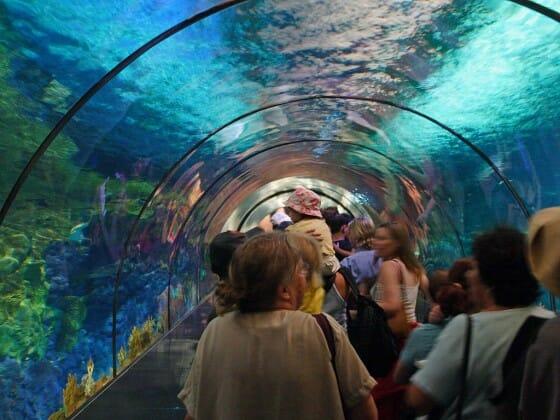 Aquário submerso para ver os tubarões no Sea World. Uma experiência inesquecível nos parques!