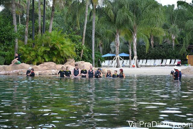 No Discovery Cove os participantes entram na piscina e nadam os os golfinhos, uma experiência mais completa e interativa (e muito mais cara também)