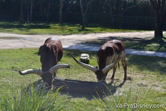 Aproveite a visita ao hotel para ver uns animais da savana africana!