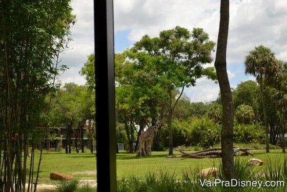 Olha a girafa ali no fundo. Essa foto foi tirada de uma das janelas do Sanaa.