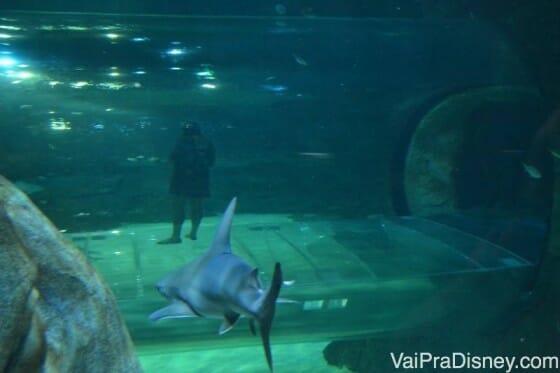 Dá para tirar fotos ótimas no Sea Life principalmente se os seus amigos olham para a foto. A Bia, minha amiga, não faz isso. Ai Bia! Perdeu a chance de uma foto muito legal com esse tubarão. hahaha