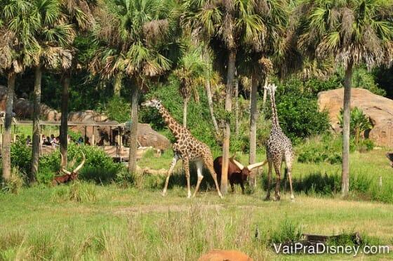 No Wild Africa Trek você vê os animais do Safari por mais tempo e mais de perto.