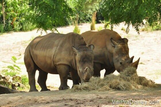 WILD-AFRICA-TREK-ANIMAL-KINGDOM-DISNEY-39
