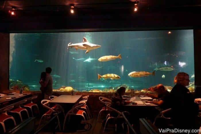 As crianças adoram os aquários. Ok, não só elas.