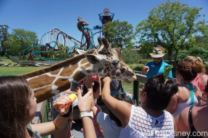 Todo mundo foi a loucura quando a girafa chegou!