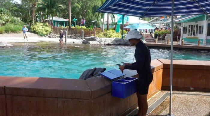 Depois de cada comando, o instrutor tirava peixes dessa caixa azul e dava na boa dos golfinhos de recompensa.