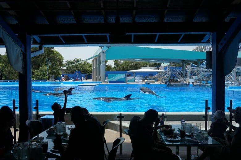 as baleias curtindo uma piscininha de boa na hora do almoço.
