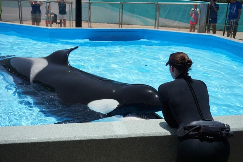 interação entre a treinadora e a baleia.