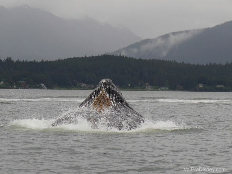 Eu, o Felipe e a minha irmã fizemos um passeio pra ver as baleias assim, de pertinho!