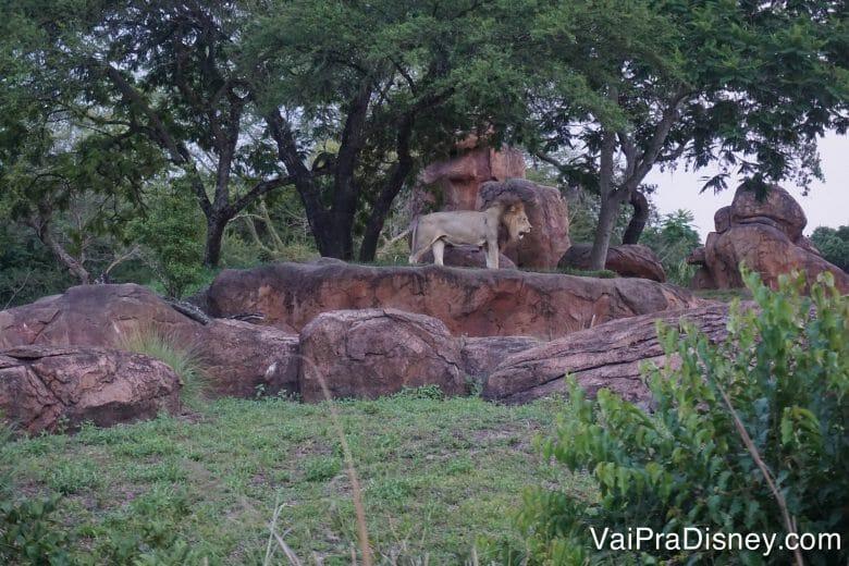 O Safari é uma atração que vale a pena gastar Fastpass+ o mais cedo possível. Alguns animais só aparecem mesmo ou bem cedinho ou mais pro fim do dia, quando o sol já deu uma trégua.