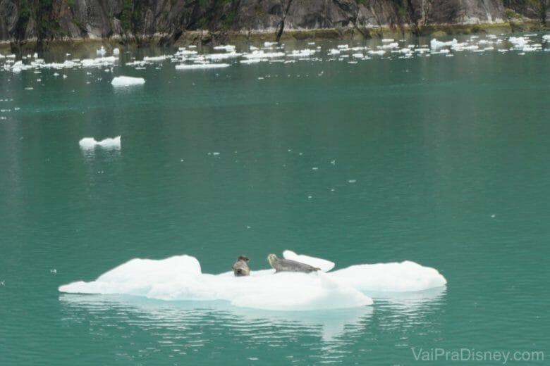 Focas de boa descansando no gelo! Eu estava mais perto dessas, mas do outro lado do nosso barco tinha outra pedra de gelo com mais umas 8 focas.