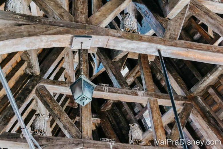 Ninguém olha muito pra cima quando está aí, mas as corujas estão todas lá!